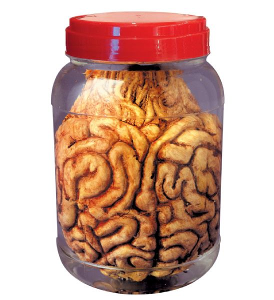 LABORATORY JAR WITH BRAIN Decoration Halloween